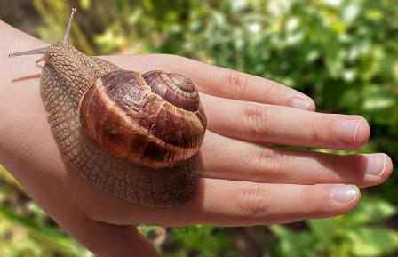 Для проверки аллергических реакций необходимо взять моллюска на руку и подержать некоторое время. Если на коже не появилось покраснения и зуда, то процедуру можно смело проходить. В противном случае придется отказаться от массажа улитками ахатинами.