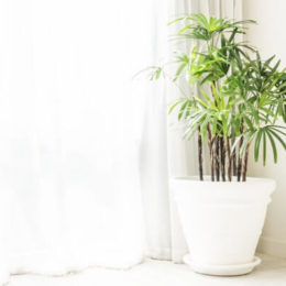 Живые растения в вашем доме